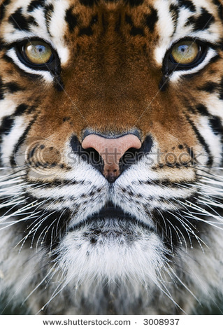I Am Happy Wallpapers Hd HD Animals: tiger face