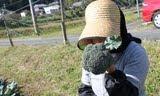 インコと農家「ミヤサイ」