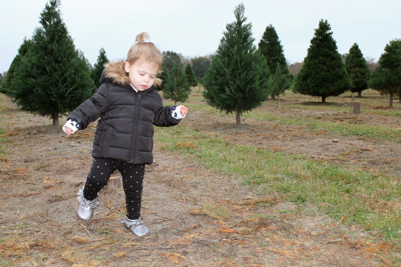 Toddler at Christmas Tree Farm | Bubbles and Gold