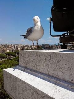 Уроки итальянского, свойства зданий