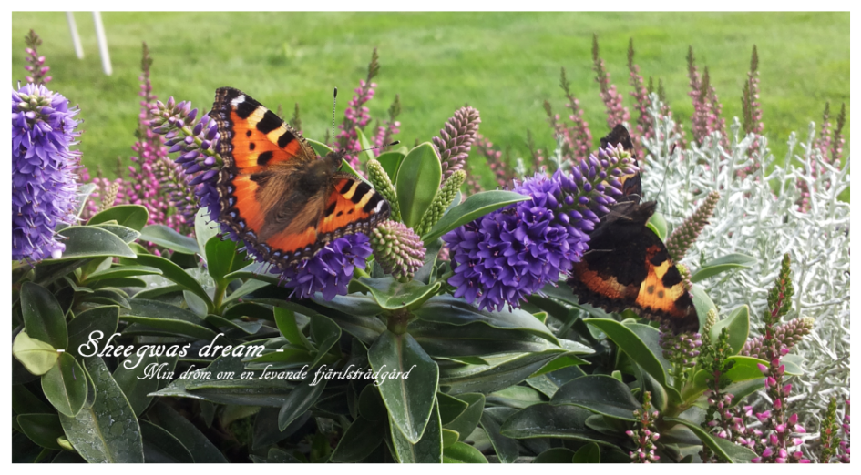 Min dröm om en levande fjärilsträdgård