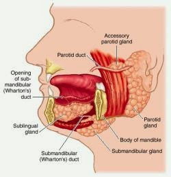 Parotid Gland Anatomy And Physiology also Thorax Overview besides Human Chest Cavity Diagram Chest Cavity Diagram Diagram further 4368565 besides Myocardial Infarction 32444221. on thoracic cavity