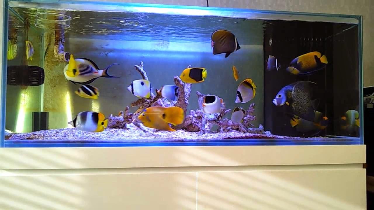 Entre peces y corales por andres corral mi primer acuario for Peces para acuario