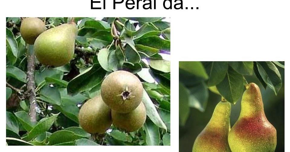 Maestra de infantil rboles frutales vocabulario en im genes for Arbol con raices y frutos
