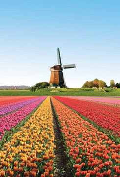 free holiday travel during spring season to holland fully sponsored 5 star package by hai-o company to premium beautiful top agents