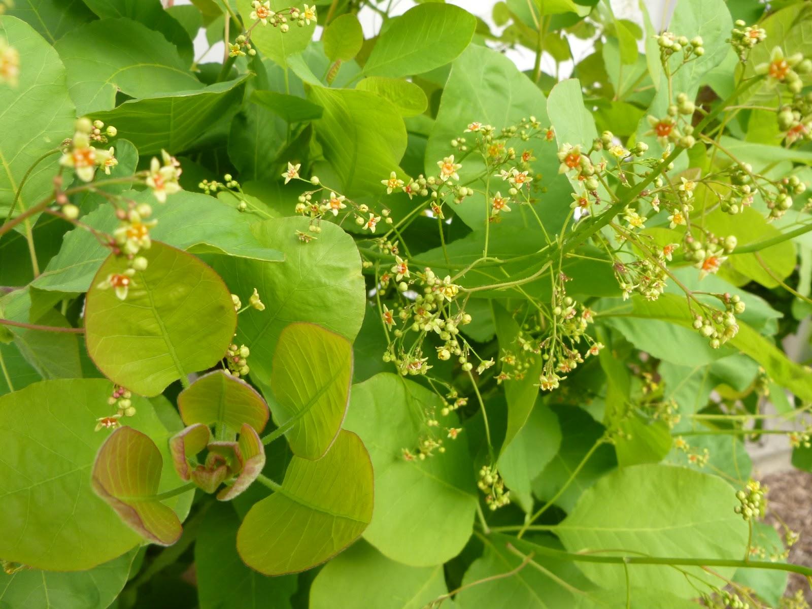 Pflanzen Blüten Blätter Sträucher Bäume Moose Pilze