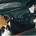 7 σκύλοι για τον Luis Vuitton...