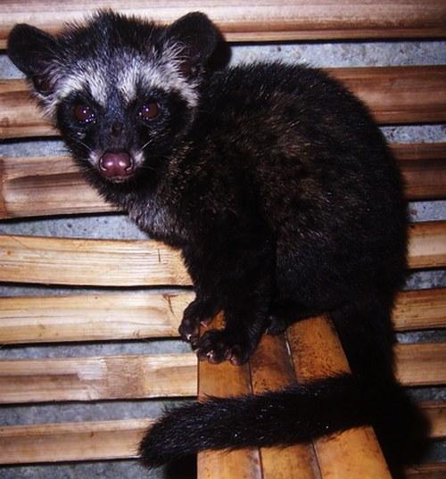 7 Binatang Yang Paling Di Takuti Ular [ www.Up2Det.com ]