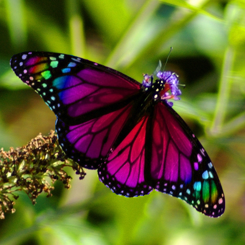 most beautiful flowers wallpapers butterflies - photo #31