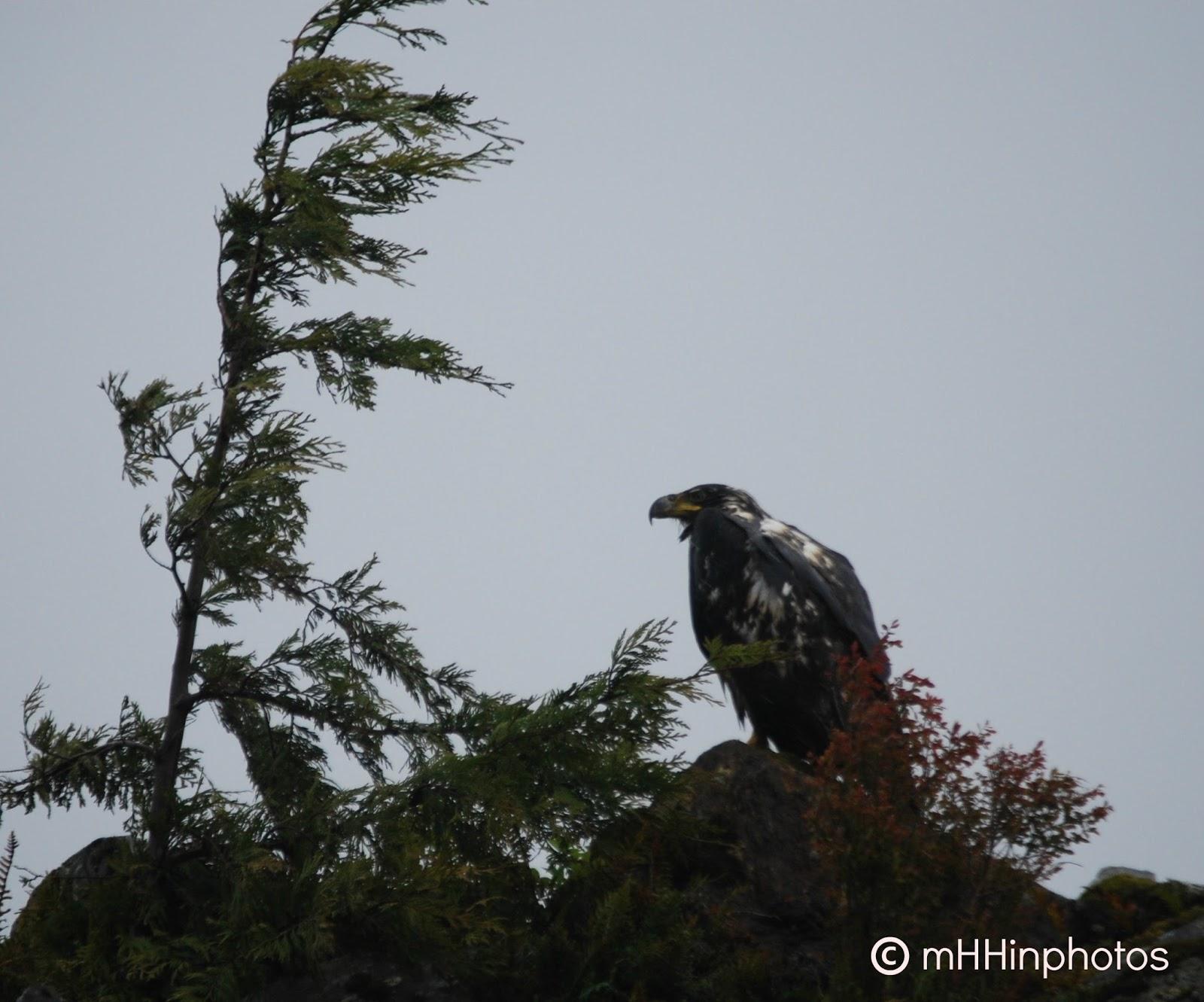 Juneau Alaska Duck Tour