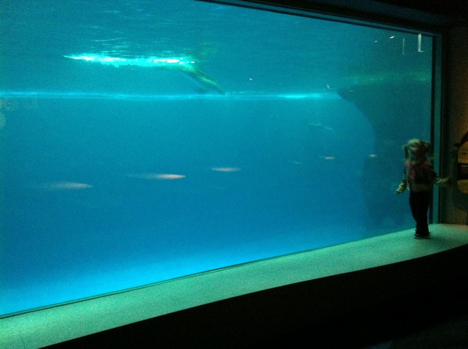 The Ultimate Life List Life List Shedd Aquarium