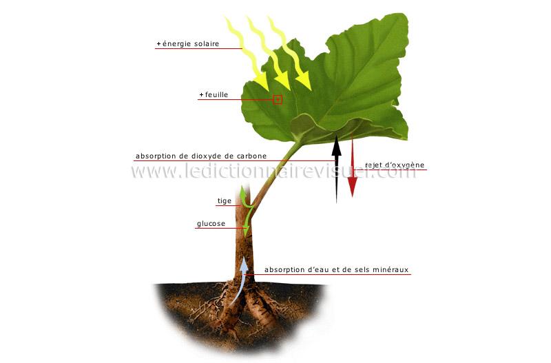 pourquoi les feuilles des arbres tombent elles en automne g n ral kulture. Black Bedroom Furniture Sets. Home Design Ideas