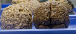 Zufällig fotografiert: Abgelegte Abgeordneten-Gehirne im Foyer, während einer TTIP-Veranstaltung.