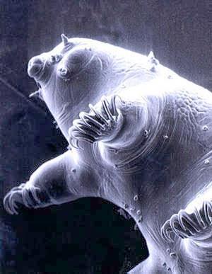 gambar beruang air