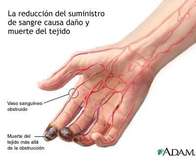 Partes de la piel