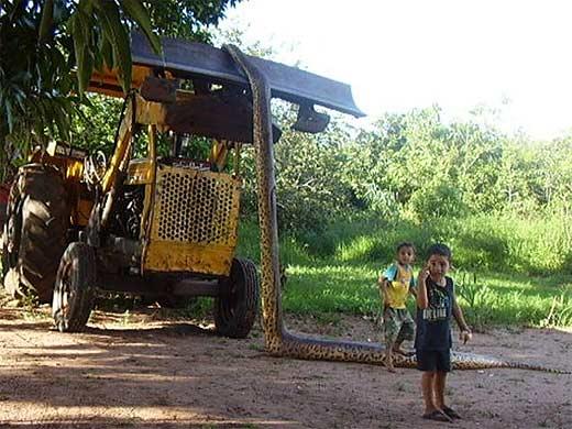 gambar ular besar di dunia