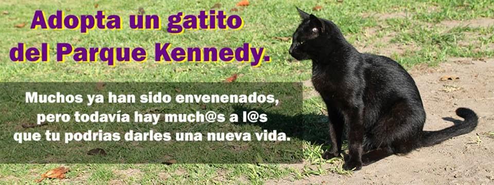 Adopta un gatito del parque Kennedy