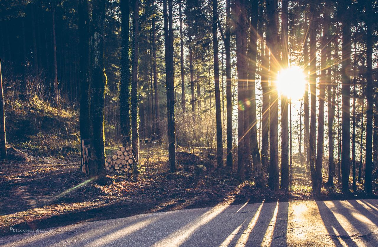 palmen sonnenuntergang tumblr sonnenuntergang zwischen bäumen blickgewinkelt