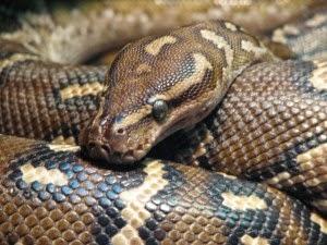 deadliest snake