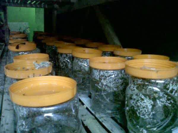http://www.carainiitu.com/2014/08/cara-sukses-budidaya-atau-ternak-semut.html