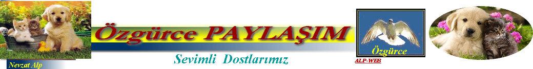 Video ANİMAL