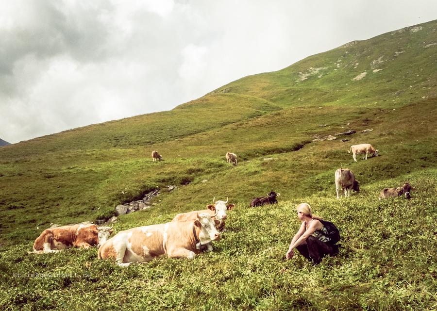 Inka guckt Kühe an