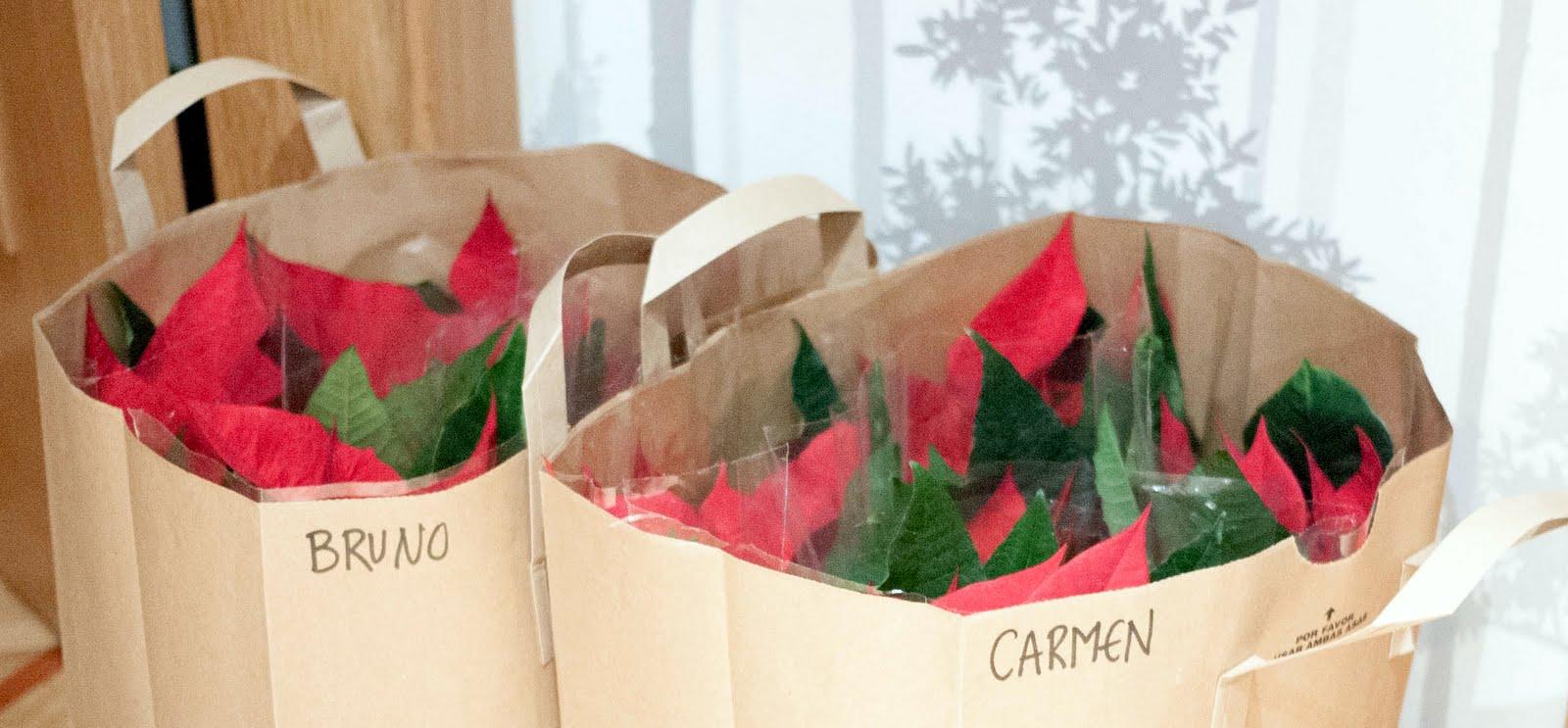 flores de pascua listas en las bolsas para regalar a los profesores en navidad
