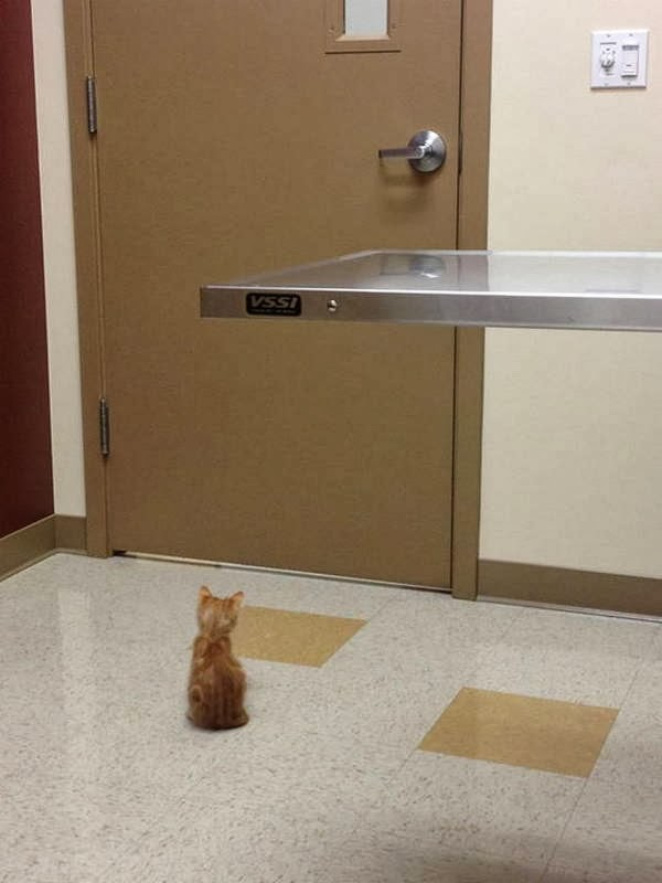 Funny cats - part 91 (40 pics + 10 gifs), kitten waits at vet