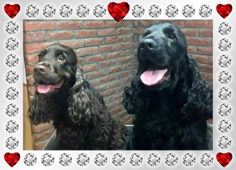 Fidelie&Kingen
