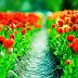 Beautiful Red Tulips Flowers Garden photos