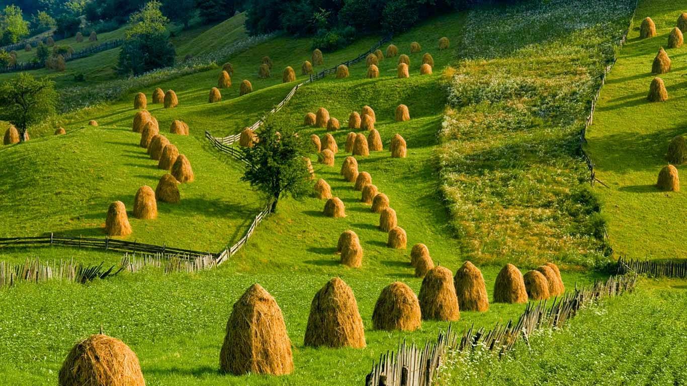 Pasture in Mânăstirea Humorului, Bukovina, Romania (© Photononstop/SuperStock) 178