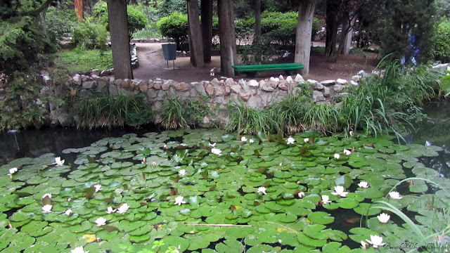 Каскад прудов Райский уголок Форос