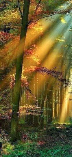 Un Bosque De Sueños