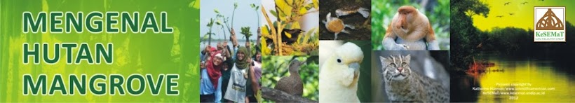 Blog KeSEMaT | Mangrove Is Lifestyle