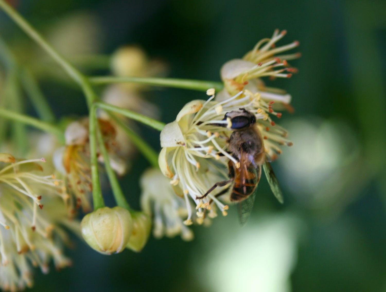 Bee on nectar