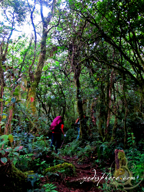 Akiki trail passing the upper montane mossy forest going to Mt. Pulag