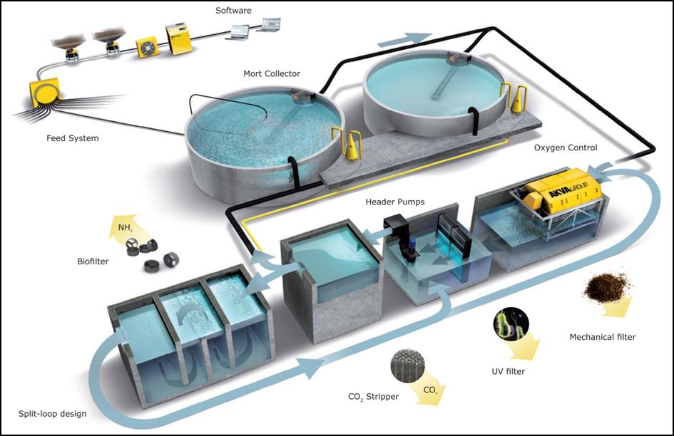 Mengenal Recirculating Aquaculture System Ras Lebih