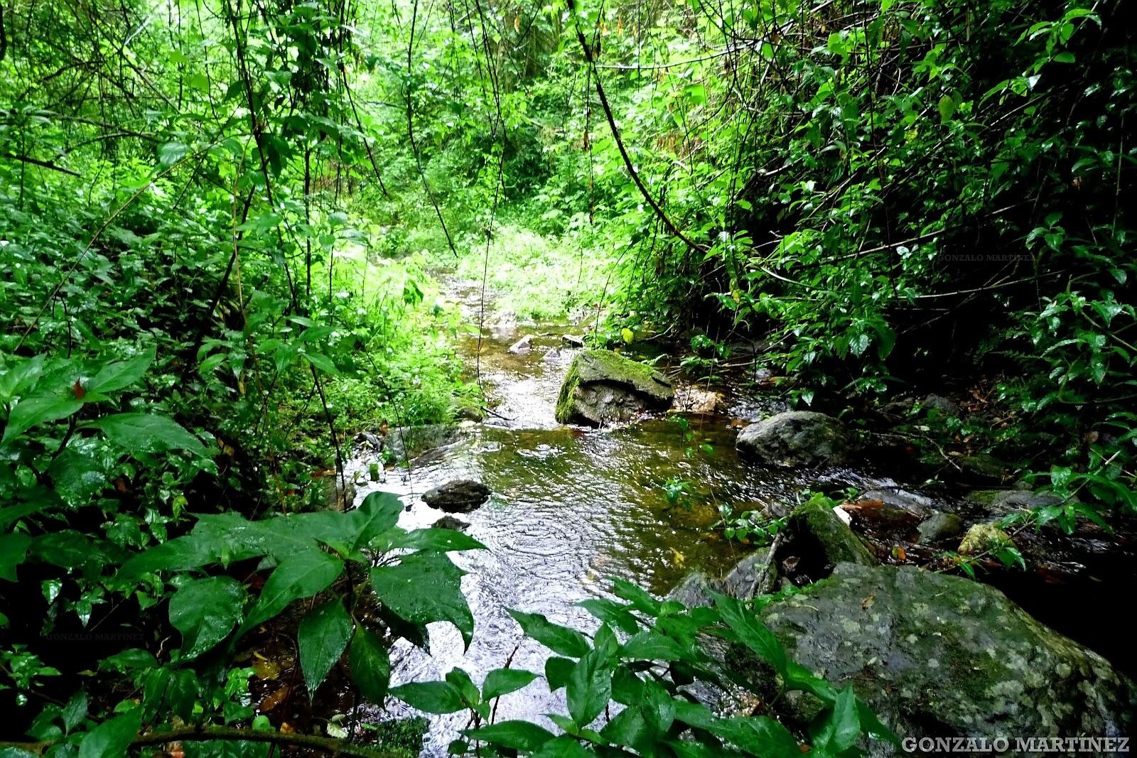 Paisajes Y Naturaleza de Catamarca: Selva de las Yungas