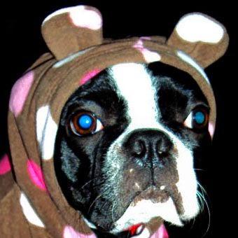 Nichole's dog Pepper, an expert snorer!