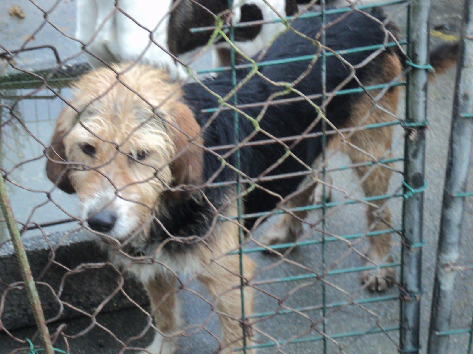 Coir s a coru a perro robado el busca perros de caza - Pienso para perros de caza ...