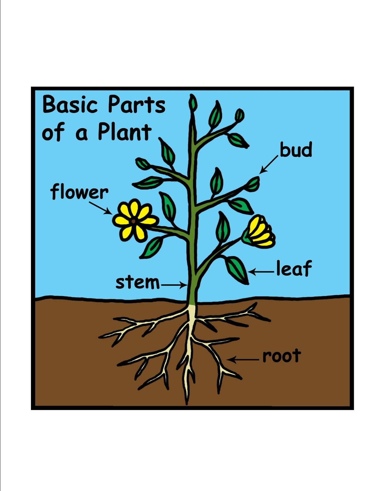 Image result for learning about plants