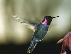 ธรรมชาติของนก