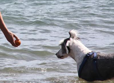 Playa de perros Estartit
