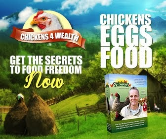 How To Keep Happy, Healthy Chickens - Chickens4Wealth