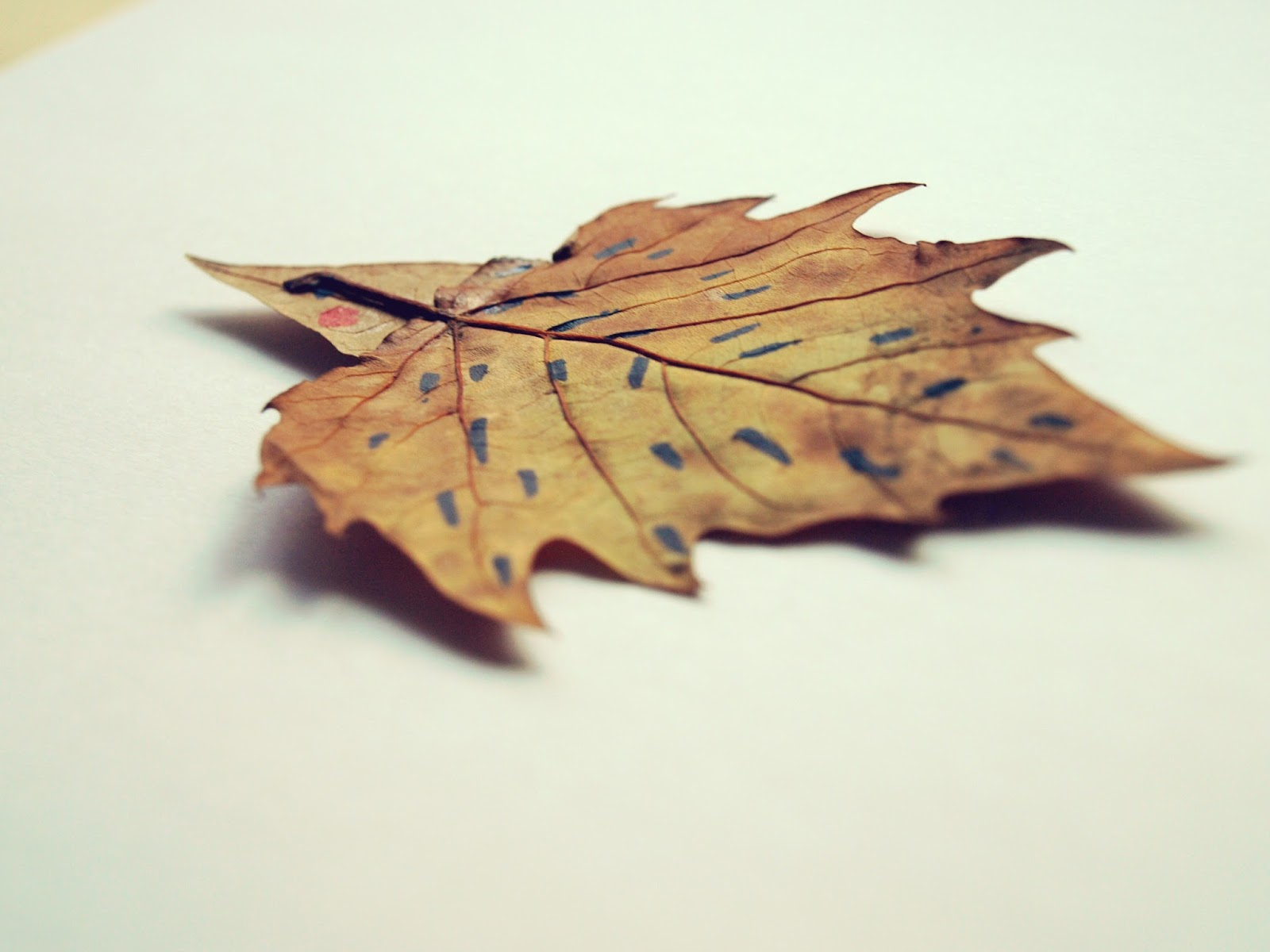Pretendiendo ser un erizo... con hojas de otoño