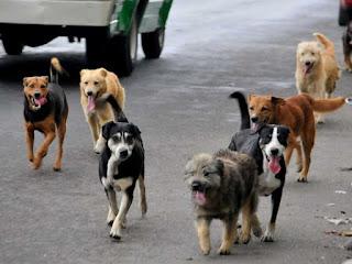 vacuna anticonceptiva en perros