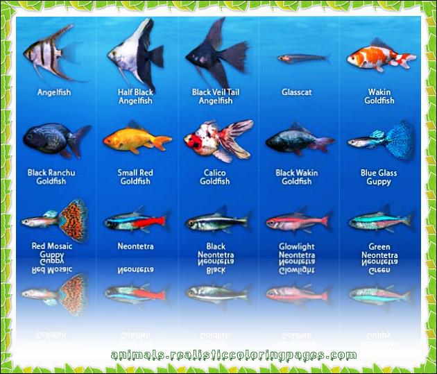 Names of saltwater fish for Freshwater aquarium fish list