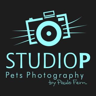 Studio P - Pets Photography
