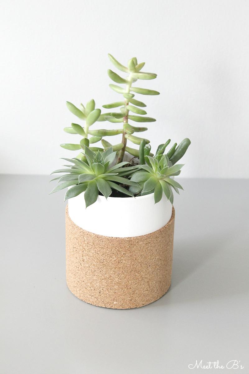 Diy cork wrapped succulent planter monthly diy challenge Planters for succulents