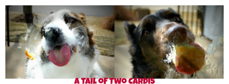 A Tail of Two Cardis